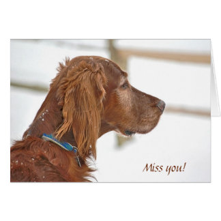 Miss You-Irish Setter in snow Card