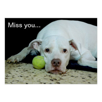 Miss you sad puppy with toy ball - cute dog poster