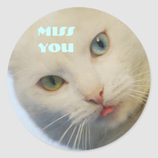 Miss you, white cat with a green eye & blue eye round sticker