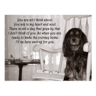 Missing You: A Cavalier KIng Charles Spaniel Card