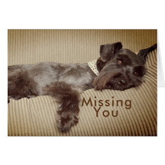 Missing You Black Miniature Schnauzer Card
