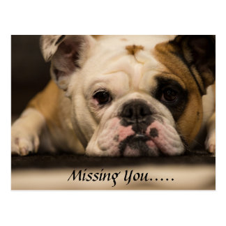 Missing You English Bull Dog Postcards