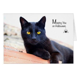 Missing You on Halloween, Black Cat with Spider Card