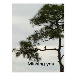 Missing You Osprey Postcard