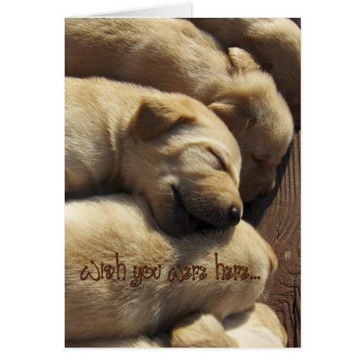 Missing You - Wish You Were Here - Labrador Greeting Card