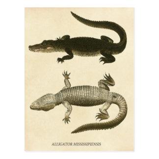 Mississippi Alligator Postcard