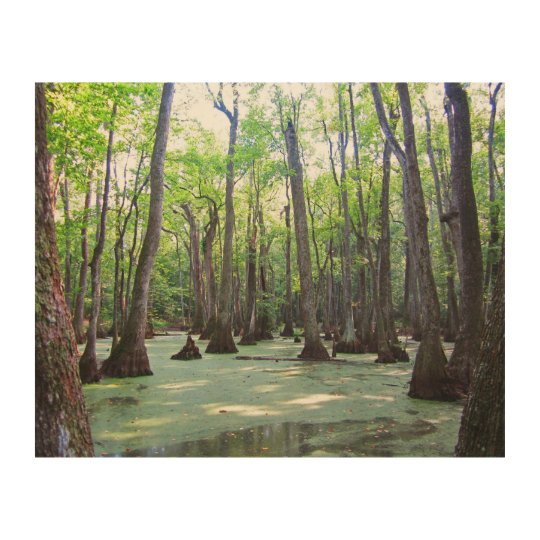 Mississippi Cypress Swamp Artwork Wood Print