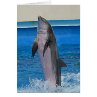 Mississippi Dolphin Card