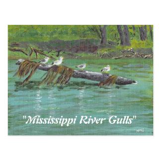 Mississippi River Gulls Postcard