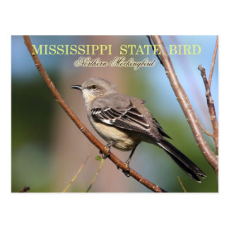 Mississippi State Bird - Northern Mockingbird Postcard