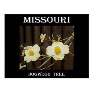 Missouri Dogwood Postcard