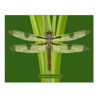 Missouri Dragonfly Postcard