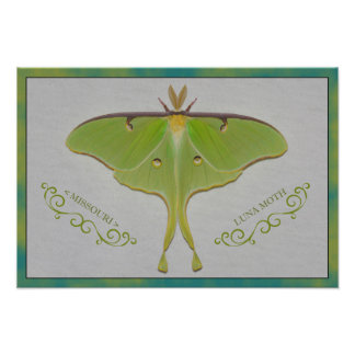 Missouri Luna Moth. Photo Print