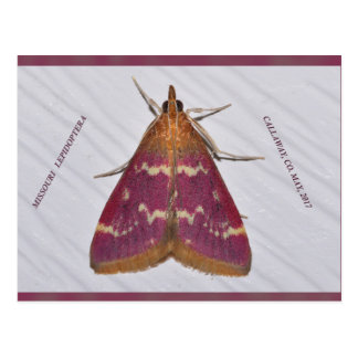 Missouri moth. postcard