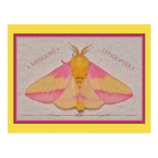 Missouri Rosy Maple Moth Deluxe. Postcard