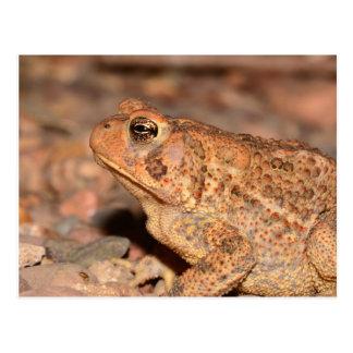 Missouri Toad Postcard