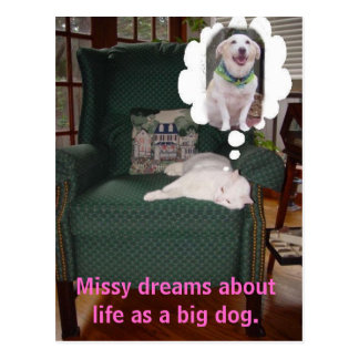 Missy dreams about life as a big dog. postcard