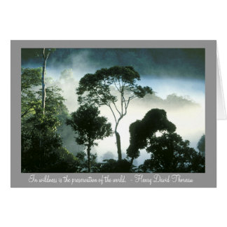 Mist Enshrouds Amazon Rainforest Card