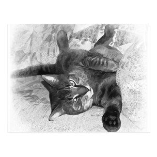Mister Cat Postcard