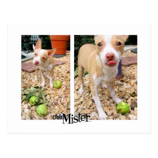 Mister Likes Them Apples! Postcard