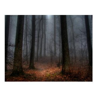 Misty Path to Flat Top Mountain Postcard