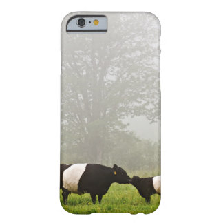 Misty scene of belted galloway cow mothering her barely there iPhone 6 case