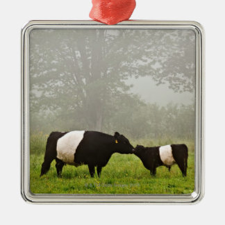 Misty scene of belted galloway cow mothering her Silver-Colored square ornament