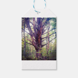 Misty Tree Gift Tags