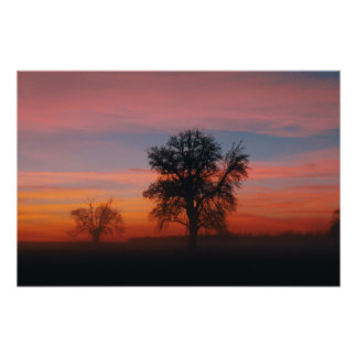 Misty Winter Sunset with Silhouetted Tree's Poster