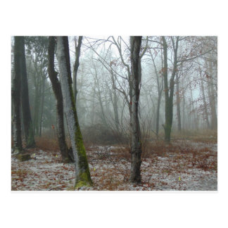 Misty Wood Postcard