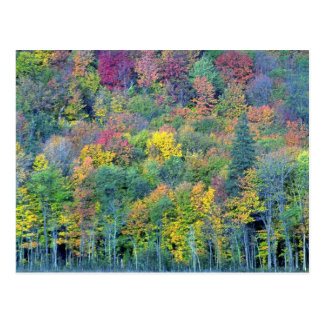 Mixed hardwood forest, Gatineau Park, Quebec, Cana Postcard