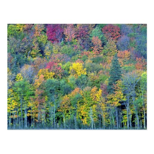 Mixed hardwood forest, Gatineau Park, Quebec, Cana Post Card