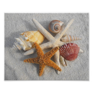 Mixed Sea Shells and Starfish on White Sand Beach Photo Print