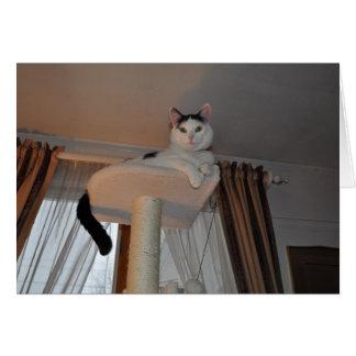Mlle Kitty Loves You Carte De Correspondance