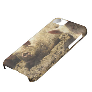 MO: Ste Genevieve, pig farm iPhone 5C Covers