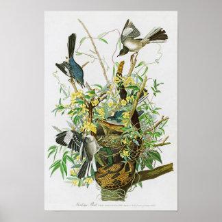 Mocking Bird John James Audubon Birds of America Poster