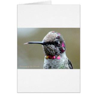Mocking Hummingbird Card