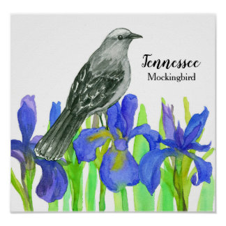 Mockingbird State Bird of Tennessee Poster