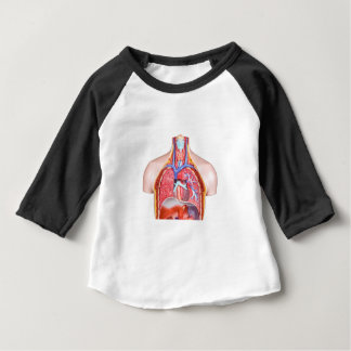 Model internal human body on white background baby T-Shirt
