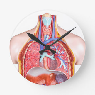 Model internal human body on white background clock