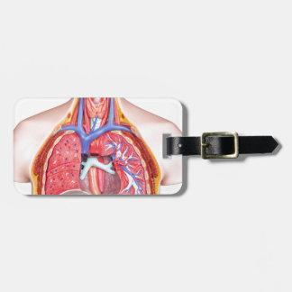 Model internal human body on white background luggage tag