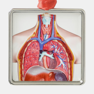Model internal human body on white background metal ornament