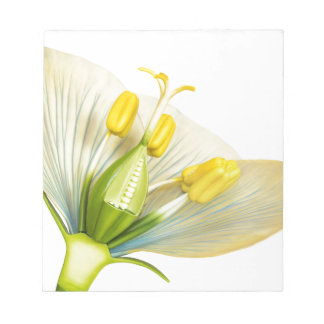 Model of flower with stamens and pistils on white notepads