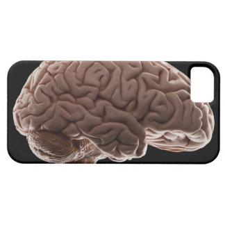 Model of human brain, studio shot iPhone 5 case