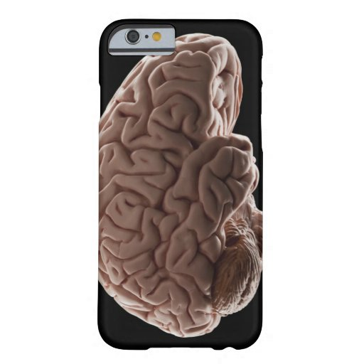 Model of human brain, studio shot iPhone 6 case