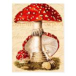 Modèle vintage de champignons de rouge de carte postale