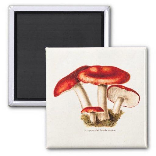 Modèle vintage de champignons de rouge de champign aimants pour réfrigérateur