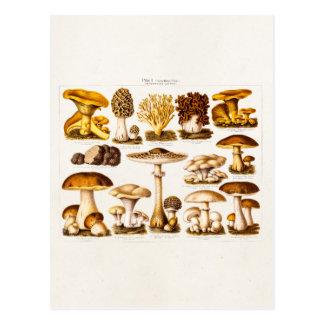 Modèle vintage de champignons de variété de cartes postales