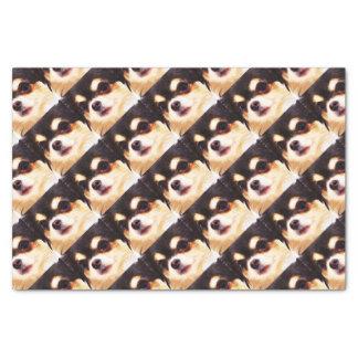 modern big Chihuahua Tissue Paper