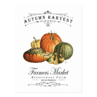 modern vintage fall gourds and pumpkin postcard